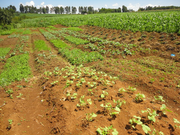 results agriculture lenana aug 2014